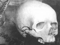 Раннее описание носовых раковин (РАННИЕ ИЗОБРАЖЕНИЯ НОСОВЫХ РАКОВИН XVВЕКА)