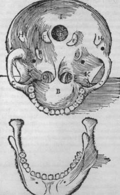Рисунок 3. Рисунок да Винчи, 1489 (Clark 19057r; из O'Malley, 1952)