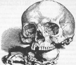 Рисунок 4. Рисунок да Винчи, 1489 (Clark 19058v; из O'Malley, 1952)